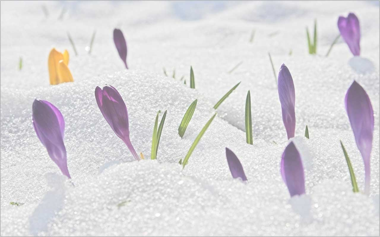 Tavaszváró zenés mulatság